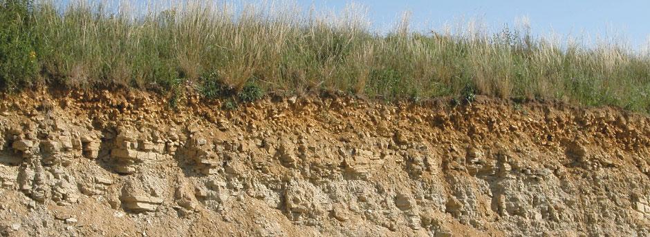 Bodenschnitt mit dünner Humusschicht