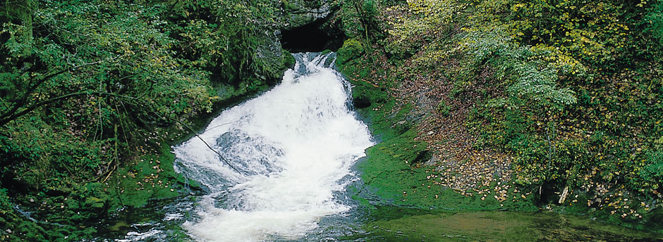 Grundwasser, an einer Quelle austretend.