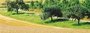 Weizenanbau und Sreuobstwiese im Werntal