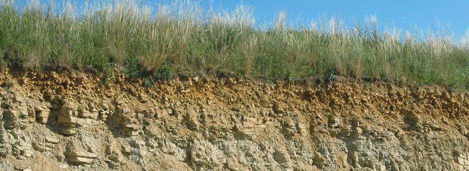 Bodenschnitt mit sichtbar dünner Humusschicht