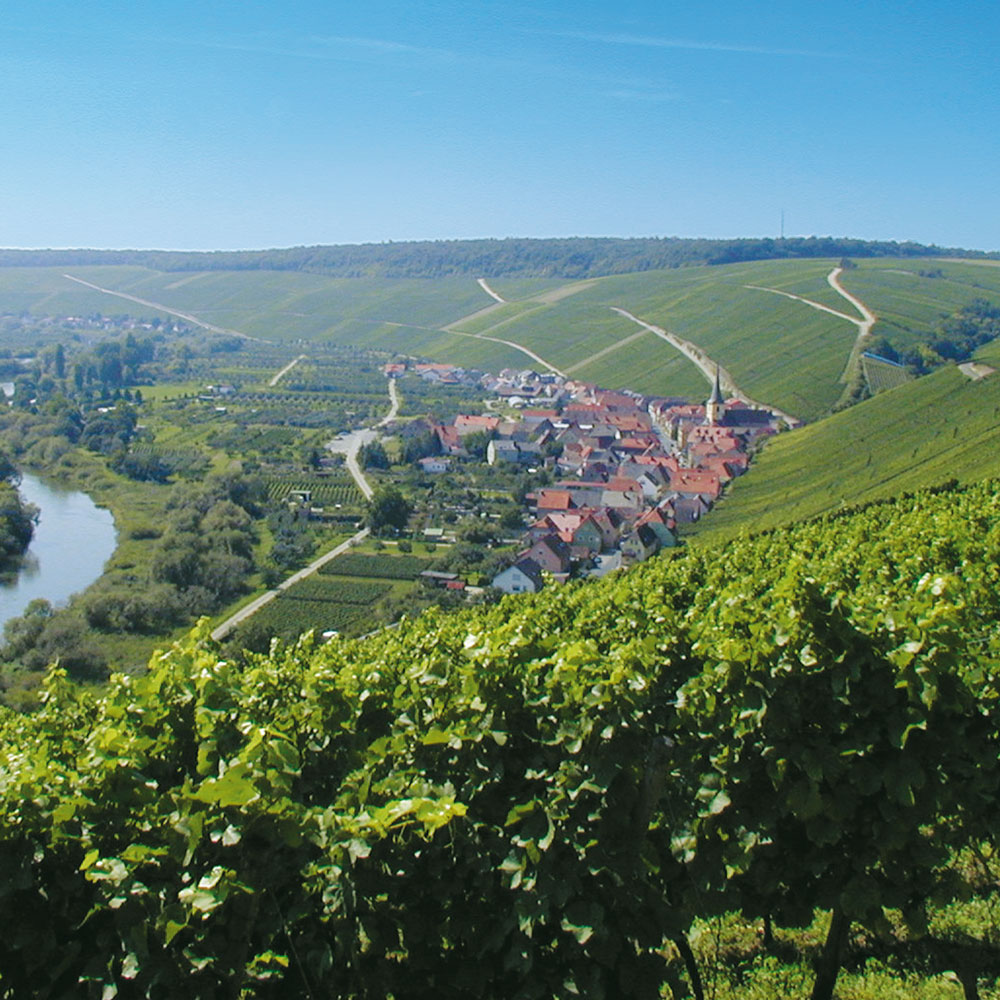 Weinbau am Main