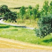Wasserschutzgebietsschild vor Getreidefeld und Streuobstwiese